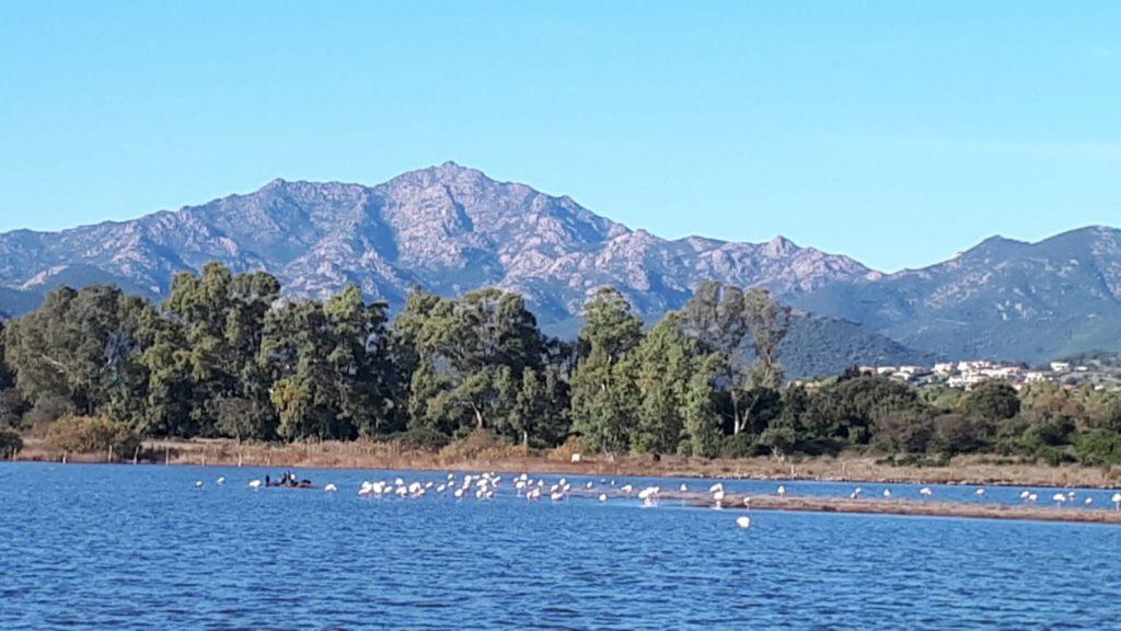 Flamingos in Agrustos